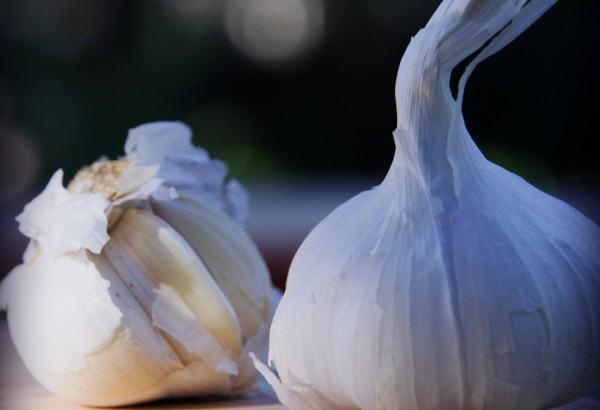 Garlic_02