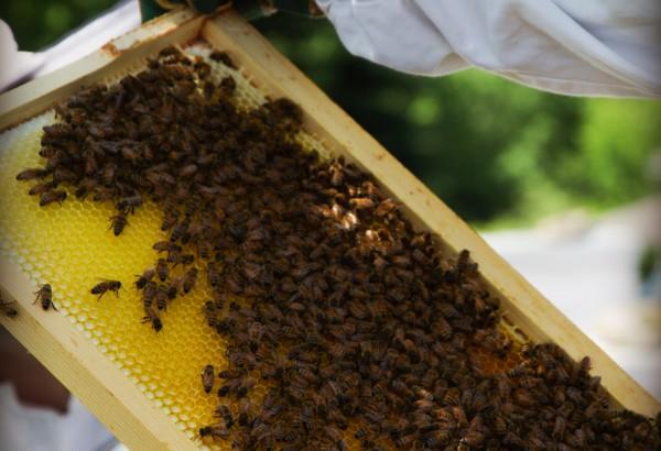 Honey_02